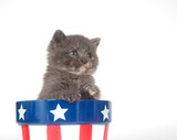 Kitten and Fourth of July poster