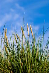 Grass, blue sky