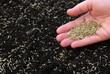 Leinwandbild Motiv Sowing grass