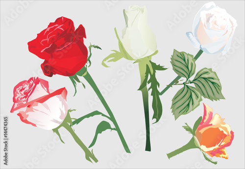 five rose flowers illustration