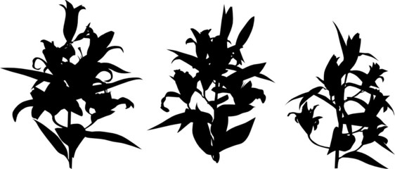 three lily silhouettes