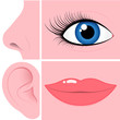 Nose, eye, ear and mouth collection