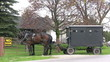 footage of amish/mennonite horse and buggy