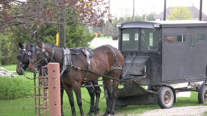 footage mennonite/amish horse and buggy