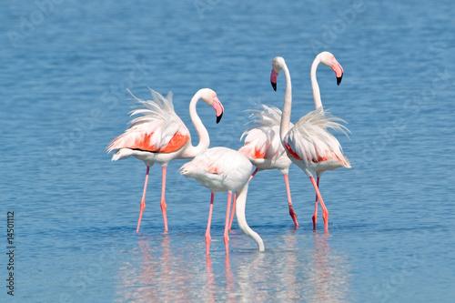 Fotobehang Flamingo Fenicotteri