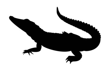 black silhouette of alligator