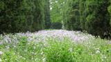 Idyllic summer meadow panorama poster