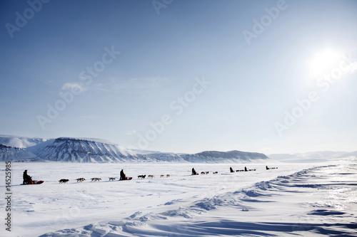 Foto op Plexiglas Antarctica 2 Dog Sled Expedition