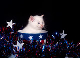 White kitten and Fourth of July poster