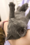 Kitten asleep in arms of owner poster