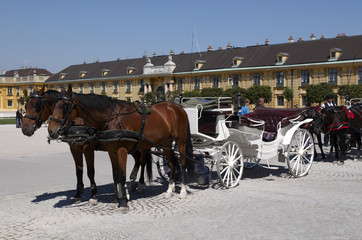 Horse team in a courtyard of Schonbrunn Palace. Vienna, Austria