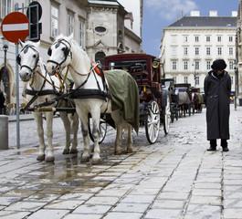 Vienna Horse & kids