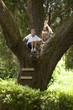 kids climbing in huge tree