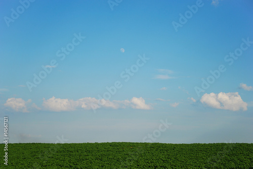 Young sunflowers field with cloudy sky background