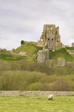 hilltop ruins of Corfe Castle in Dorset, England poster