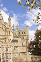view of Exeter cathedral with magnolia trees in blossom during s