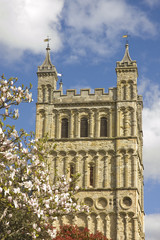 view of Exeter cathedral with magnolia trees in blossom