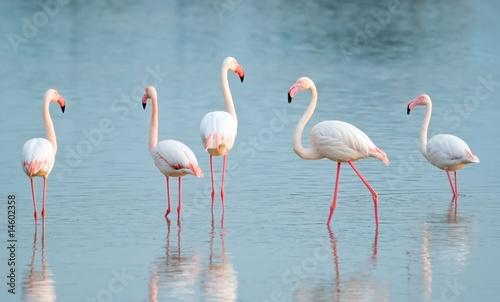 Aluminium Flamingo Quattro passi nello stagno