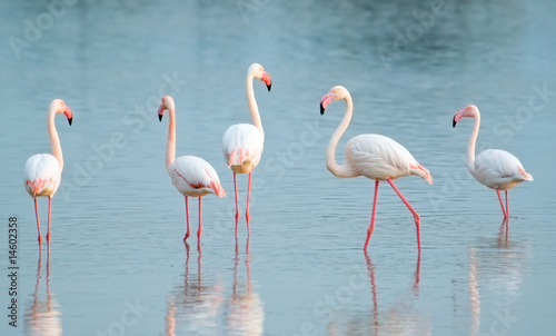 Fotobehang Flamingo Quattro passi nello stagno