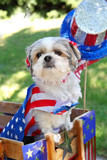 Dog dressed up for a 4th of July parade poster