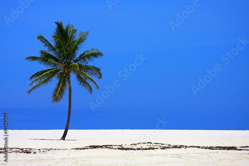 An isolated coconut palm on a beach in the Bahamas.