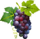 Fototapety Black grapes