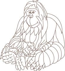 vector -  contour orangutan isolated on background