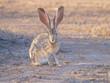 Rabbit Watching