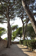 Park with trees in Cannes