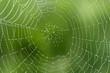 Leinwanddruck Bild - Spinnwebe im Gegenlicht