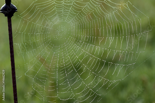 canvas print picture Spinnwebe im Gegenlicht