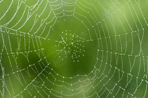 Leinwanddruck Bild Spinnwebe im Gegenlicht