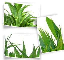 photos de petits palmiers