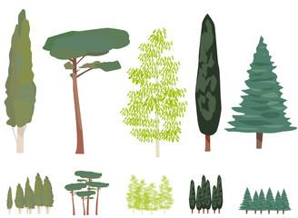 Planche d'arbres