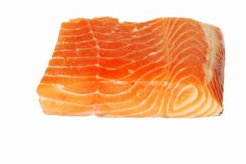salmon  - Salmo salar