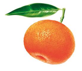 Mandarine mit Blatt