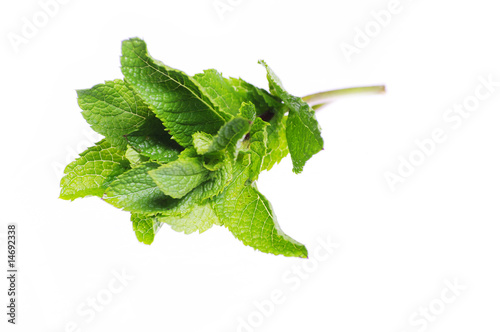 mint grass twig