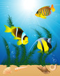 roleta: Exotic fish under water