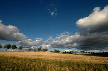 champs moissonné