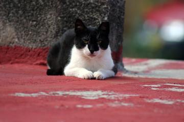 gato mascota. animal de compañia