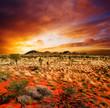 canvas print picture - Sunset Desert Beauty
