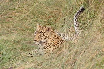 Leopard in Sabi Sand Private Reserve