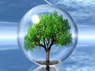 arbre dans sa bulle