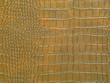 Golden dragon texture
