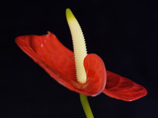Exotic Flower on Black Background 6