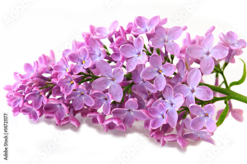 Foto op Canvas Lilac Spring Lilac