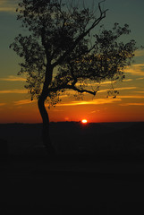 Sunset Silhouetted Tree