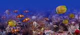 Exotic fishes - Fine Art prints
