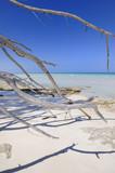 Idyllic beach poster
