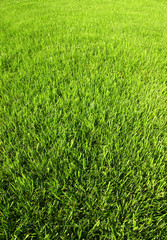 Juicy grass